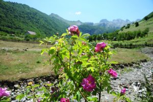 Why To Visit Kelmendi In Albania