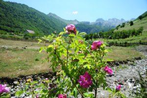 Why To Visit Kelmendi In Albania