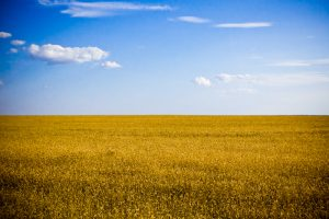 Opinion: Ukraine Is Not Ready For A Free Market In Agriculture Land