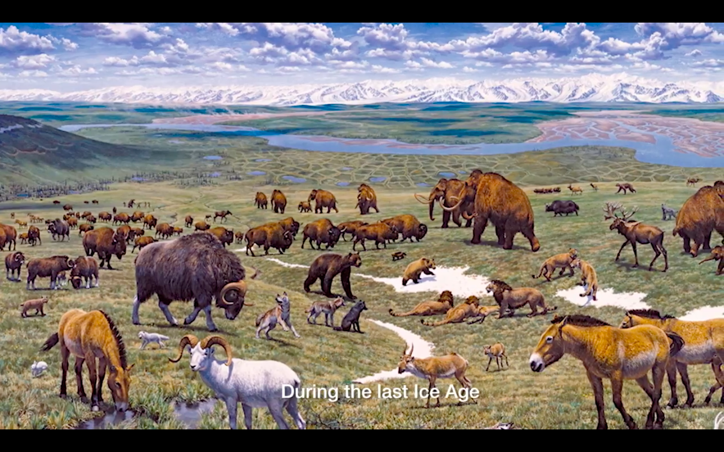 Video: Siberia Recreates Prehistoric, Ice Age Ecosystem, To Be Complete With Woolly Mammoths
