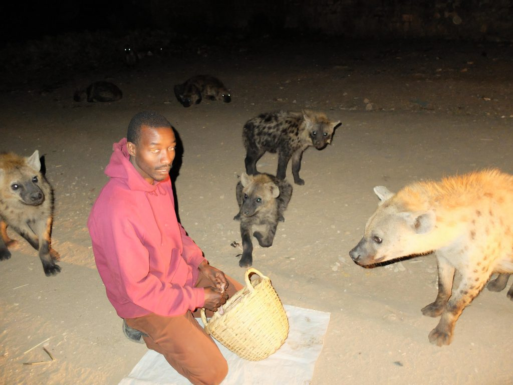 Hyenas, Coffee, And Qat - The City Of Harrar In Ethiopia Offers Much To Delight