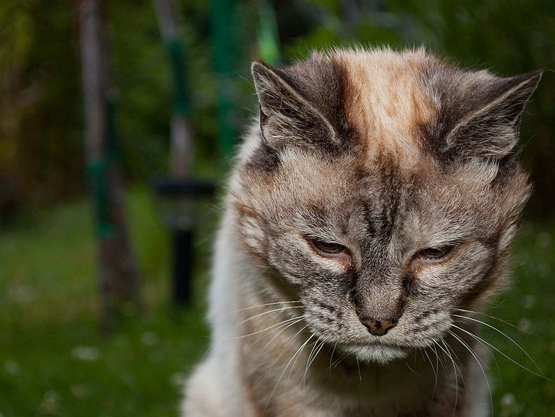 Russian State Media Informs Virus Can Be Transmitted By House Cats
