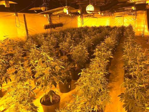 Albania Is Europe's Main Cannabis Supplier Reports Italian Antimafia